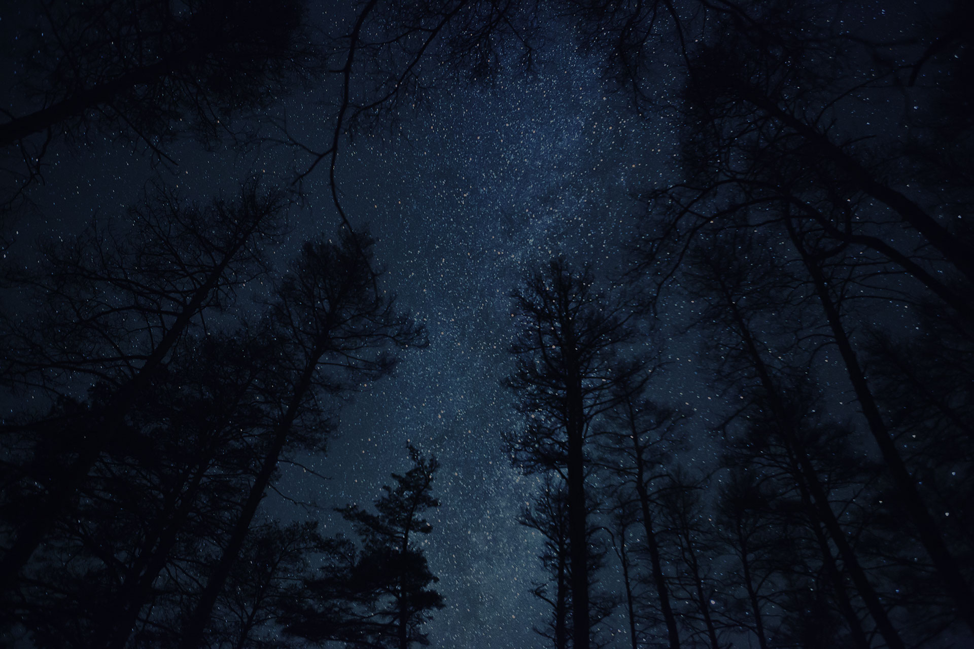 dark sky full of stars view through the tall pine tries