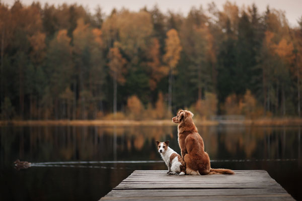 Two dogs outdoors, friendship, relationship, together