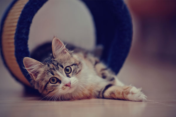 The domestic multi-colored kitten sits on a floor.